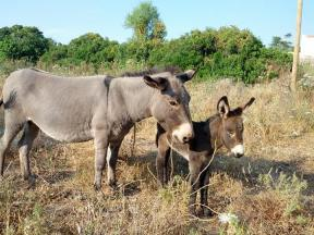 Our local donkeys : Luna & Sole.